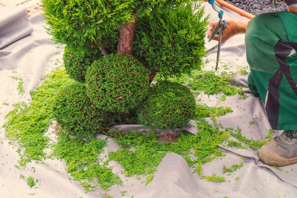 hedge trimming Brisbane