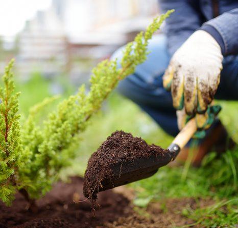 gardening brisbane